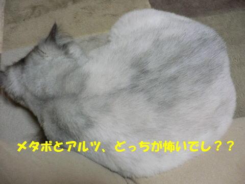 rin319_1.jpg