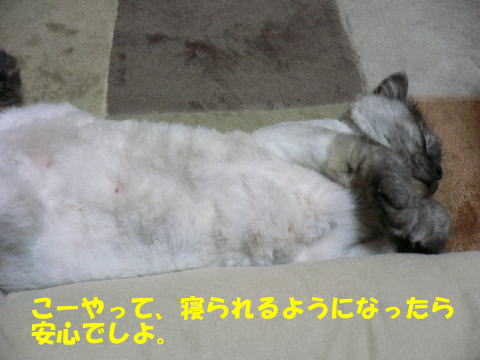 rin324_1.jpg