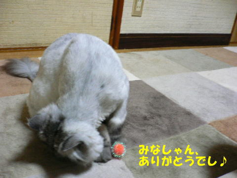 rin340_1.jpg