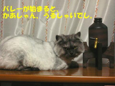 rin347_1.jpg