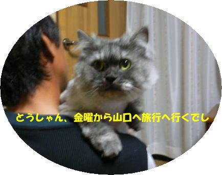 rin348_1.jpg