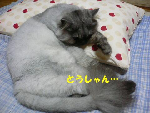 rin354_1.jpg
