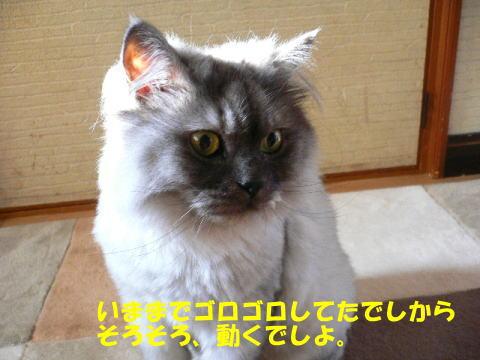 rin358_1.jpg