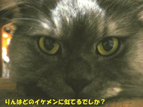 rin364_1.jpg