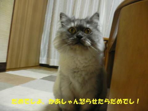 rin365_1.jpg