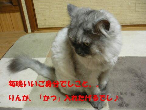 rin370_1.jpg