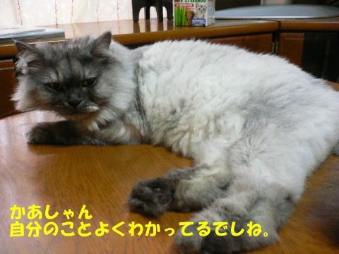 rin374_1.jpg