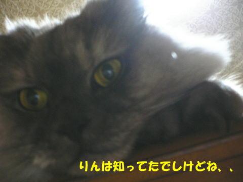 rin387_1.jpg