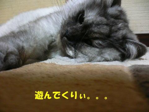 rin394_1.jpg