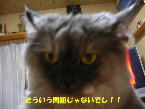 rin403_1.jpg