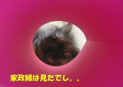 rin405_1.jpg