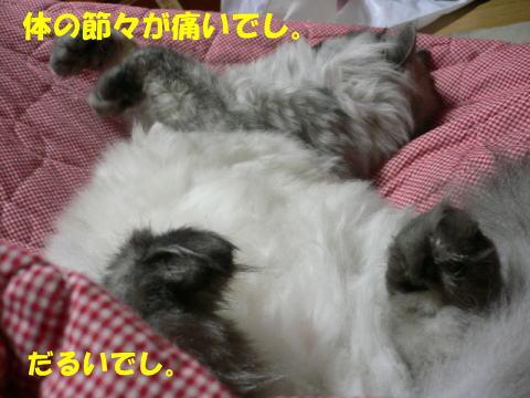 rin411_1.jpg