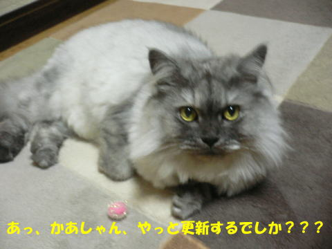 rin421_1.jpg