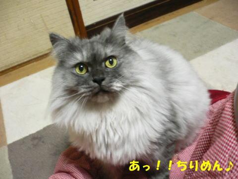 rin424_1.jpg
