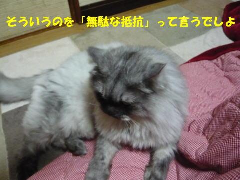 rin435_1.jpg