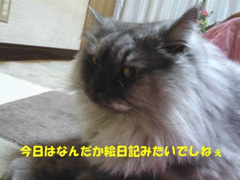 rin437_1.jpg
