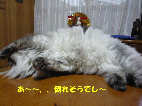 rin454_1.jpg