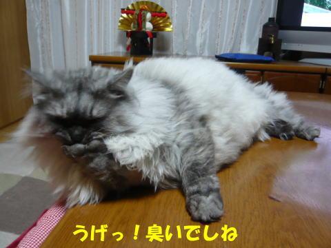 rin456_1.jpg
