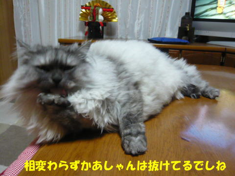 rin457_1.jpg