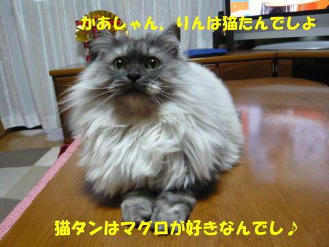 rin458_1.jpg