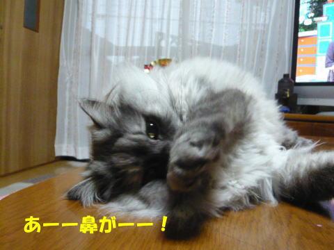 rin459_1.jpg
