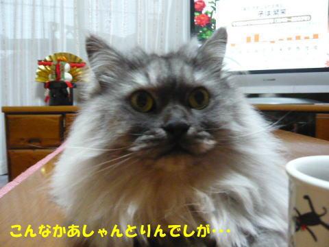rin463_1.jpg