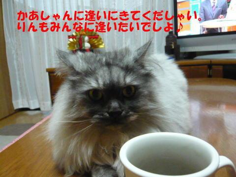 rin464_1.jpg