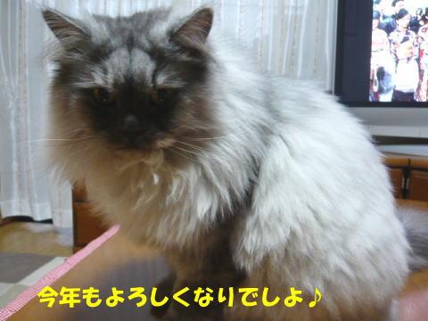 rin465_1.jpg