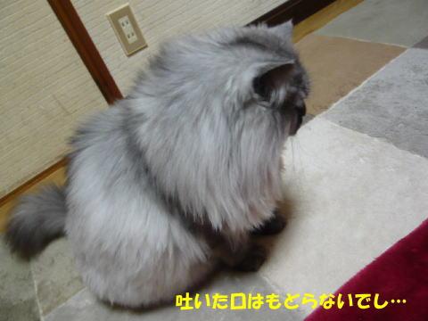 rin469_1.jpg