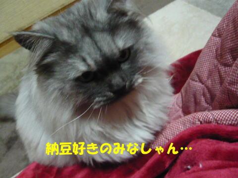 rin475_1.jpg
