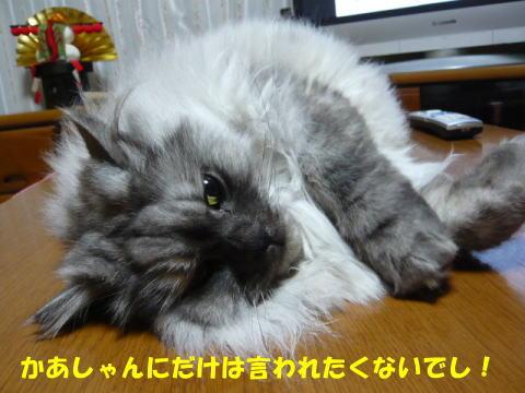 rin477_1.jpg