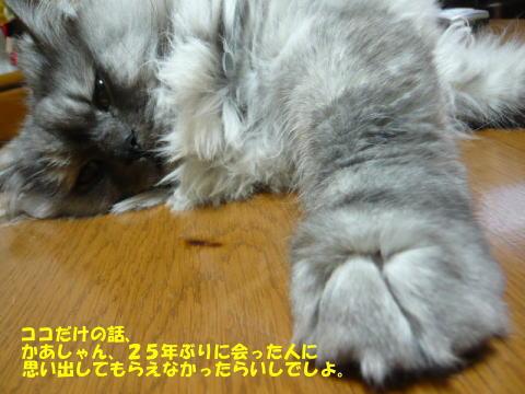 rin479_1.jpg