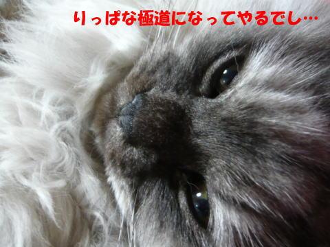 rin482_1.jpg