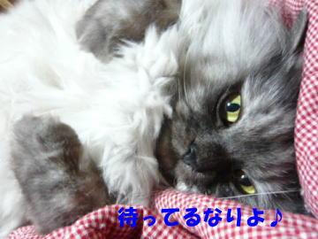 rin489_1.jpg