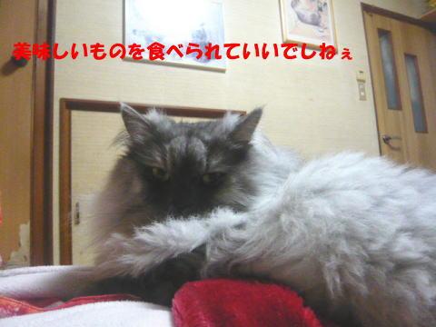 rin503_1.jpg