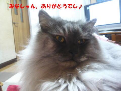 rin504_1.jpg