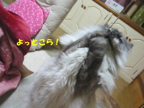 rin543_1.jpg