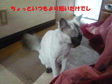rin580_1.jpg