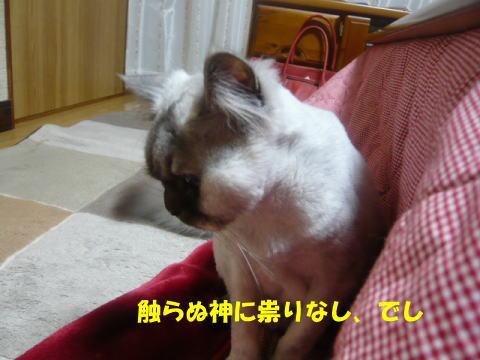 rin604_1.jpg