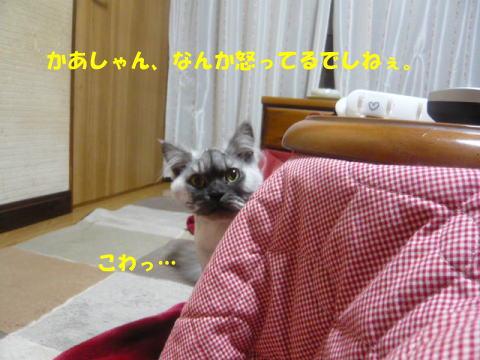 rin605_1.jpg