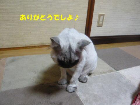 rin608_1.jpg