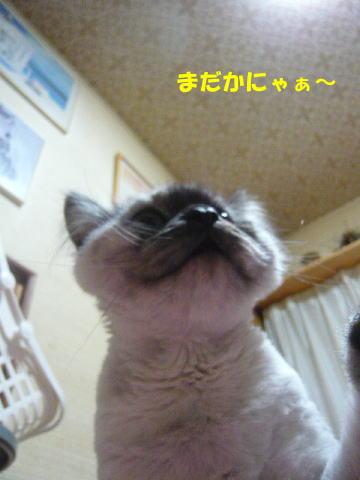 rin614_1.jpg