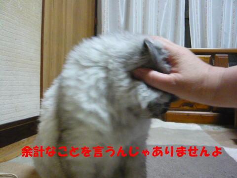 rin639_1.jpg