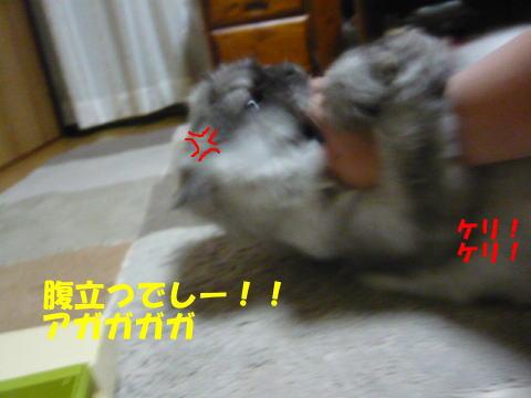 rin642_1.jpg