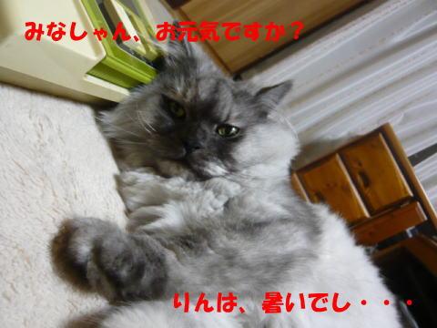 rin643_1.jpg