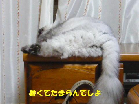 rin649_1.jpg