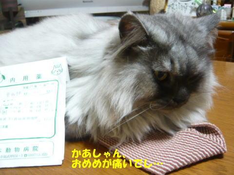 rin662_1.jpg