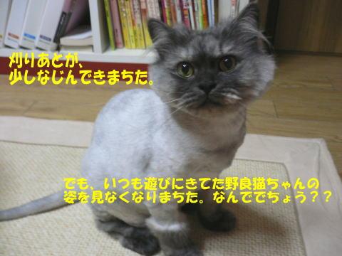 rin82_1.jpg