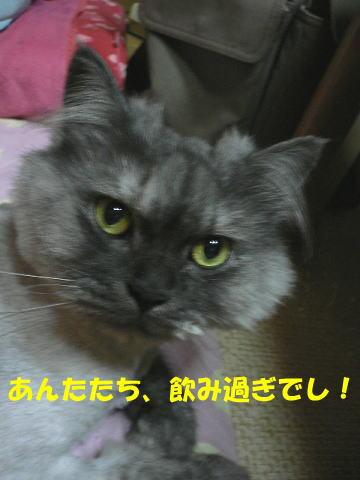 rin85_1.jpg