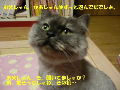 rin96_1.jpg